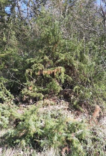 Gene vrier